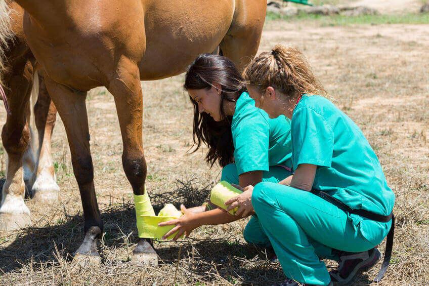 aloe vera rimedio per i cavalli