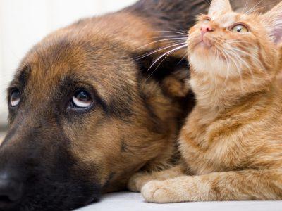 ustioni cani e gatti aloe vera